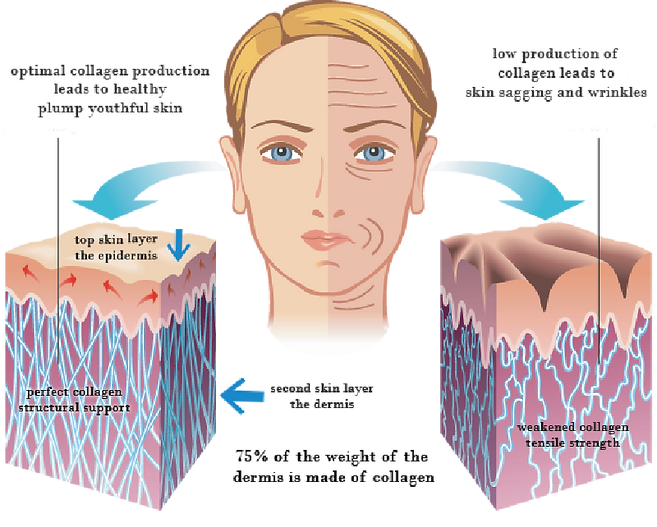 Skin Rejuvenation Diagram