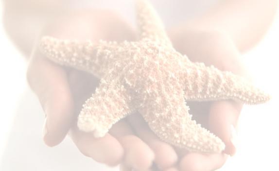 Starfish in child's hand