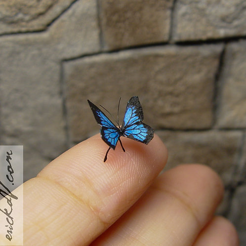 Tiny miniature Blue and Black butterfly  #1