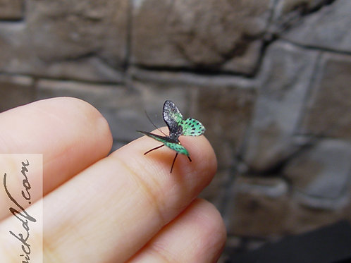 Tiny Green and Black Butterfly Miniature