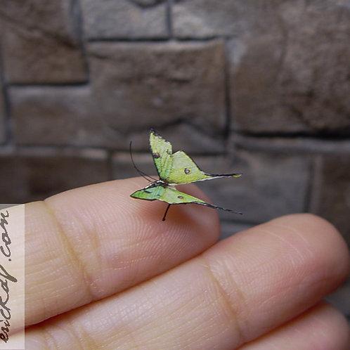 Tiny Luna Moth Miniature