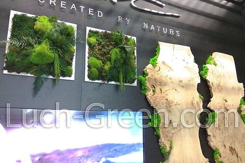 Картина из мха и стабилизированных растений