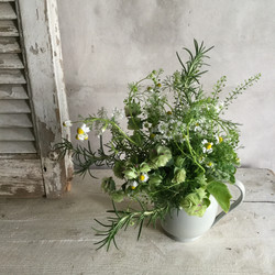 herbs bouquet