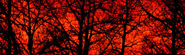 Featured_SunsetSilhouette_InteriorPlains