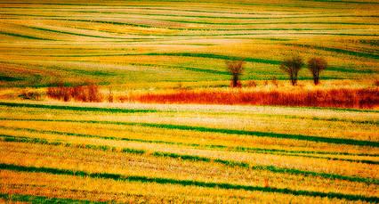 REGION_InteriorPlains_AutumnField.jpg