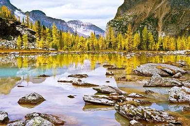 09_REGION_Cordillera_AutumnLarches.jpg