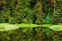 WORKSHOP_Tree_Reflection_GBR-598x400.jpg