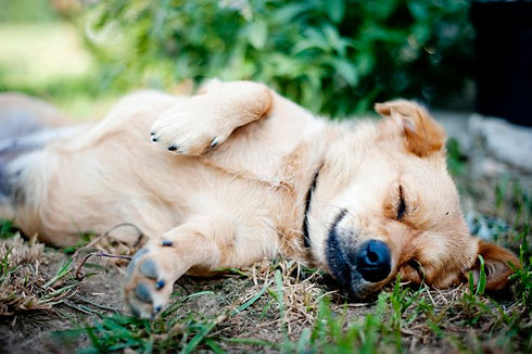 graphicstock-cute-dog-is-outside-in-the-