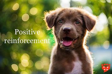 positive-reinforcement-pupp.jpg
