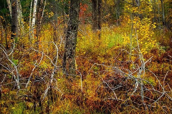 REGION_CanadianShield_NaturesComposition