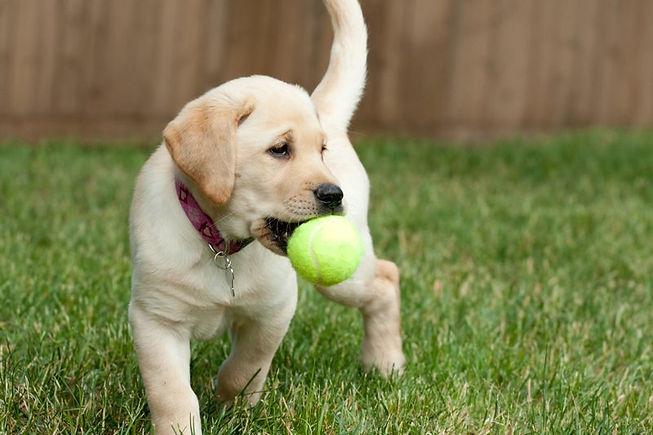 puppy play 1.jpg