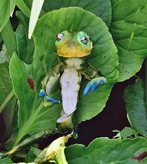 Frog on leaf.JPG