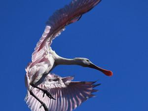 Wading Bird Rookery at St. Augustine Alligator Farm
