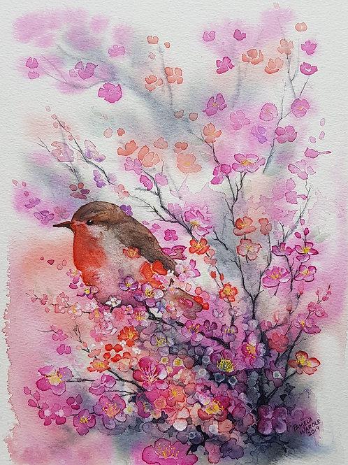 Birds in blossom - Robin