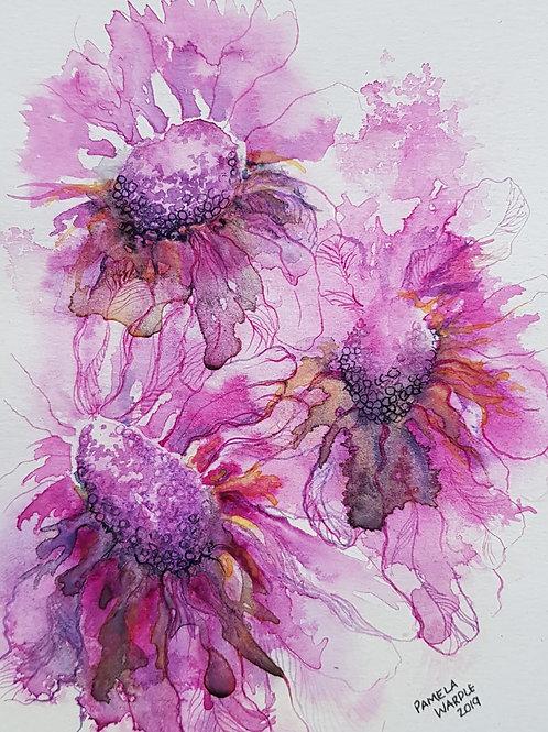 Purple Scabious