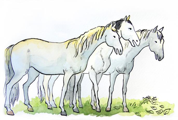 Three Horses Talking with Bonzo