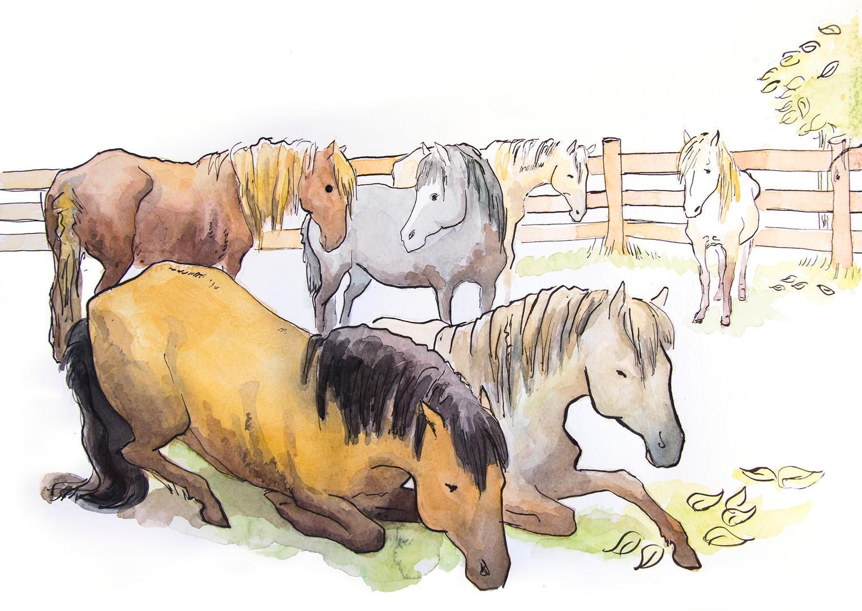Ill Ponies