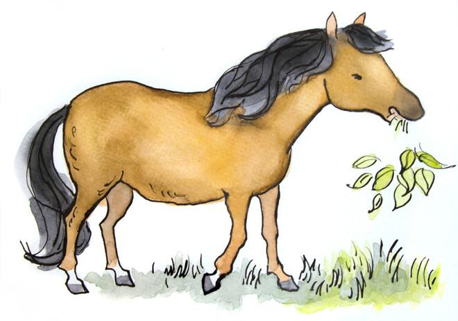 The Pony Bonzo