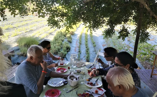 PICNIC in the Aromatic Herbs Plantation