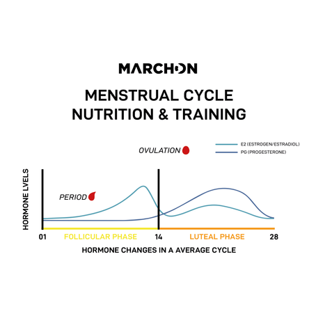 Menstrual cycle, nutrition & training