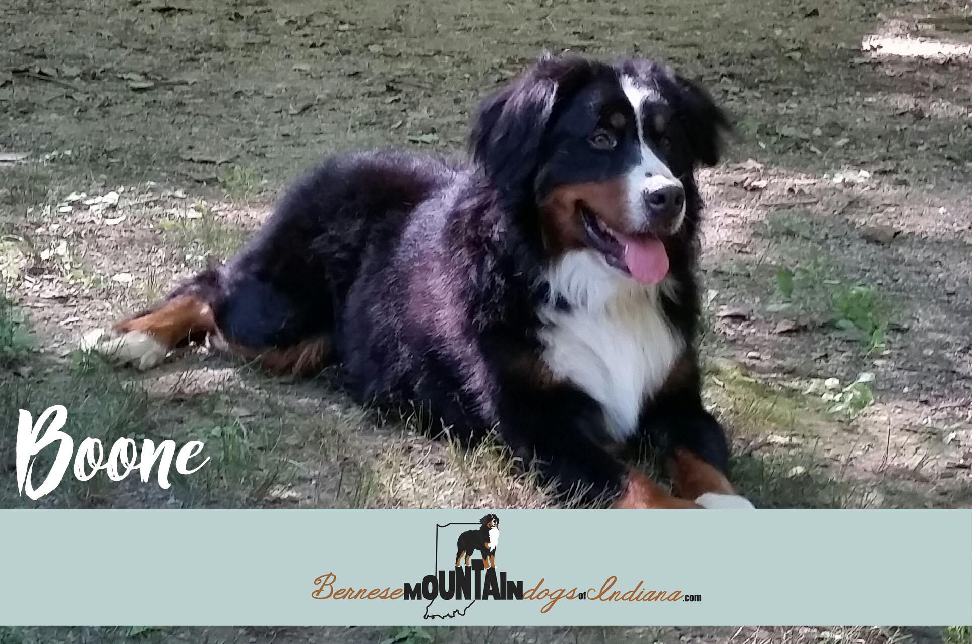 Boone 15 mo.
