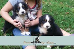 2 pups b and d litter