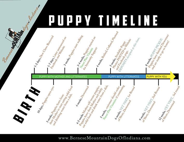 Puppy Timeline image.jpg