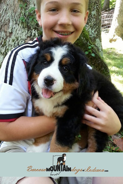 7 week old pup