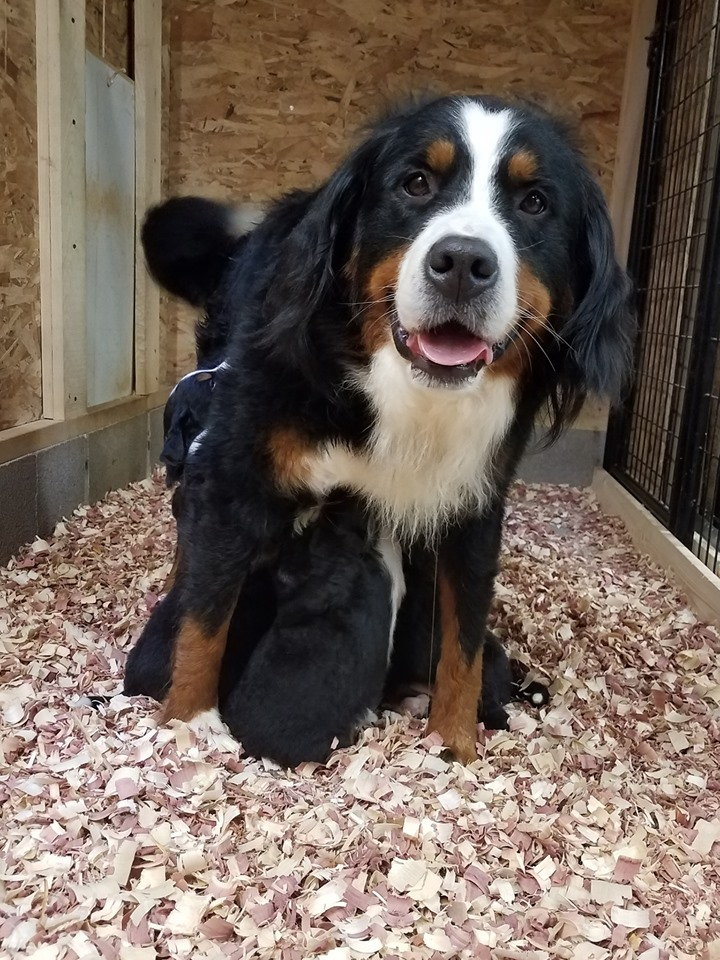 rush stand up nursing litter