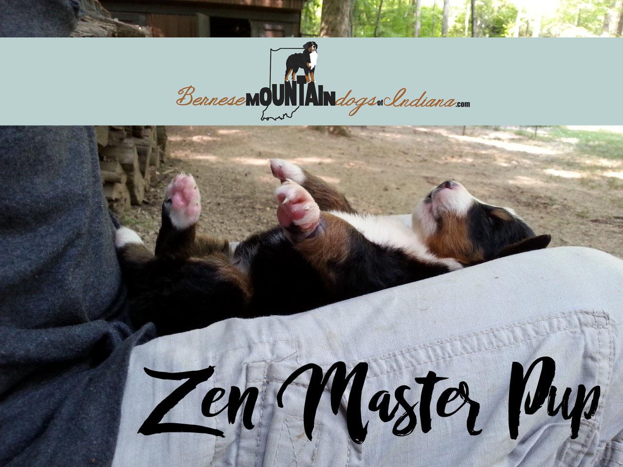 Zen Master Pup