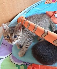 Chat reccueilli par L'Arche de la Gazelle, association qui vient en aide aux chats errant dans le secteur de Marseille et Aix-en-Provence (Bouches-du-Rhône)