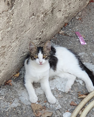 Chat reccueilli par L'Arche de la Gazelle, association qui vient en aide aux chats errant dans le secteur de Marseille et Aix-en-Provence (Bouches-du-Rhône)E.jpg