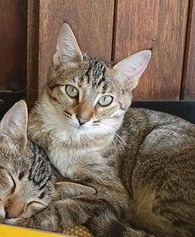 Chat reccueilli par L'Arche de la Gazelle, association qui vient en aide aux chats errant dans le secteur de Marseille et Aix-en-Provence (Bouches-du-Rhône)nch_Padmée_copie_3.jpg
