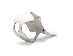 Porpoise Skull (partial)