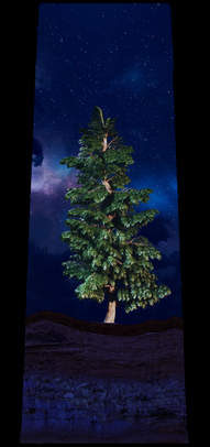 COSMIC TREE MASTER SEQUENCE_03242.png