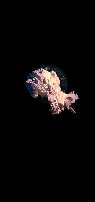 COSMIC TREE MASTER SEQUENCE_06753.png