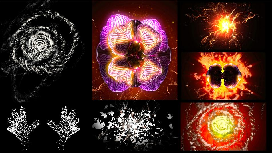 Anya Elements Layout.png