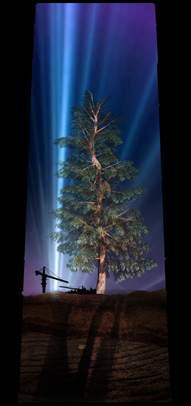 COSMIC TREE MASTER SEQUENCE_03541.png
