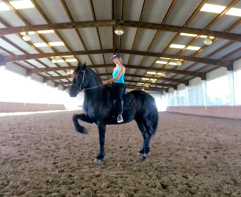 M-Bar-K Farms | Horse training