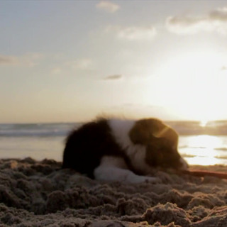 foster a puppy