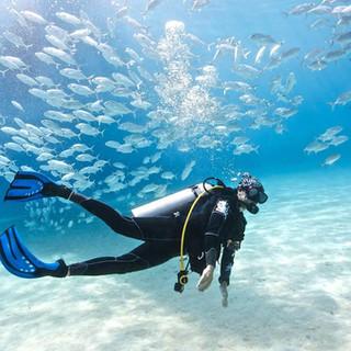 visit a reef