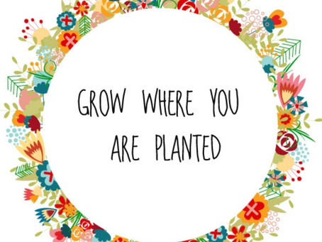 The Adventure to great soap & how to find it : #9 Grow where you are planted