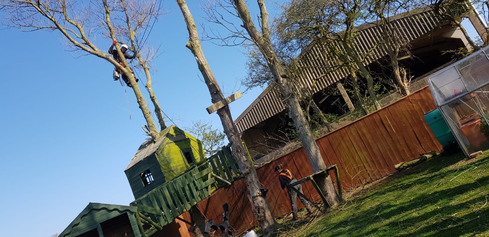 Tree professionals in Scarborough, Whitby & Bridlington