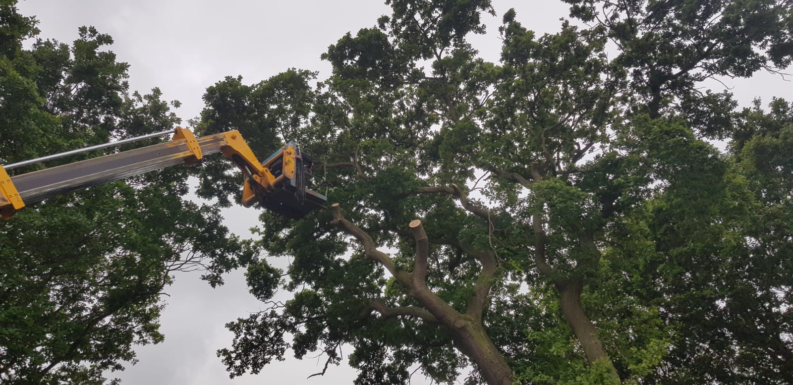 Tree Surgeon in Scarborough, Whitby & Bridlington