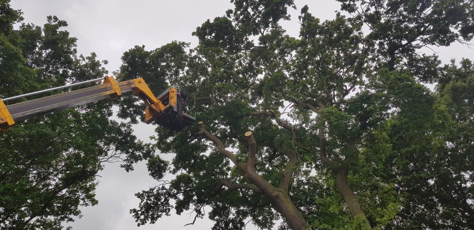 Tree Surgeon in Scarborough, Whitby & Bridlington