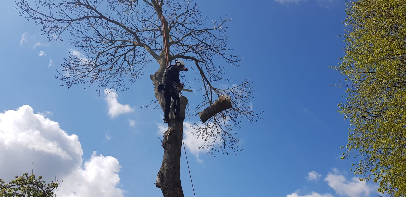Tree works in Bridlington, Whitby & Filey