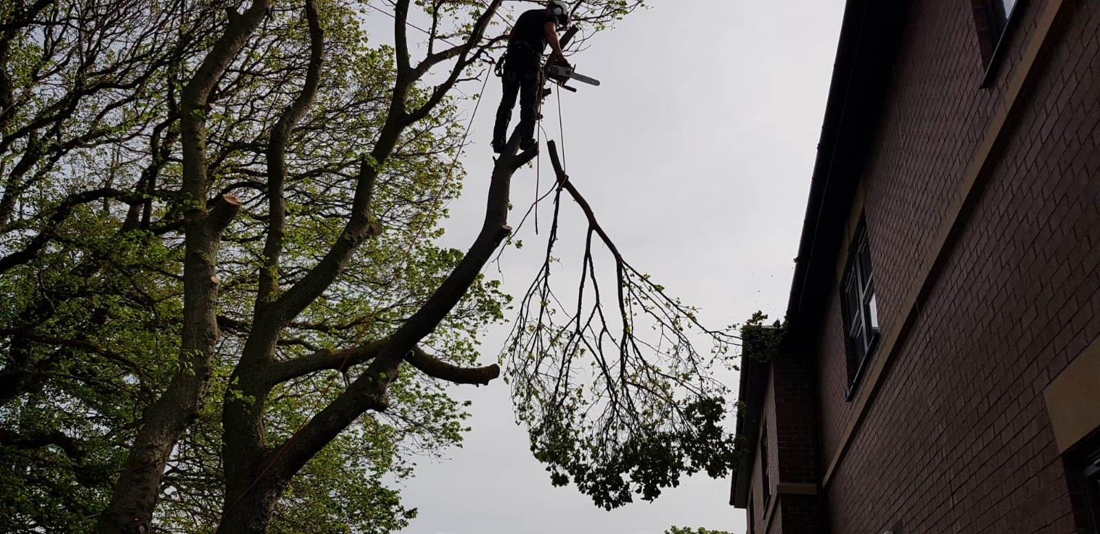 Tree specialists in Scarborough, Bridlington & Whitby