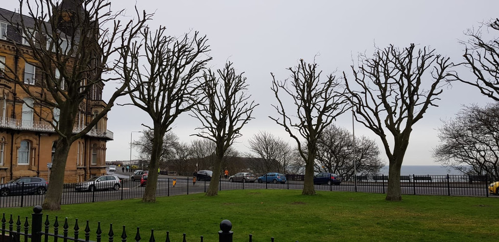 Tree Care Services in Scarborough, Whitby & Bridlington
