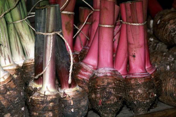 Photo de taro, légume de Polynésie française