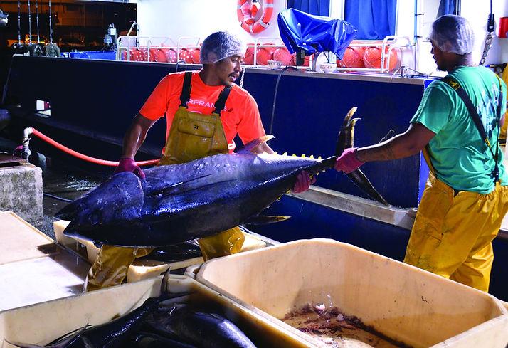 des pêcheurs salariés avec un thon